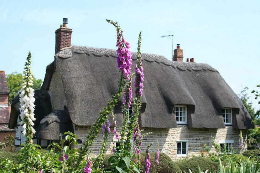 image is of a thatched cottage with pink foxgloves in the foreground.